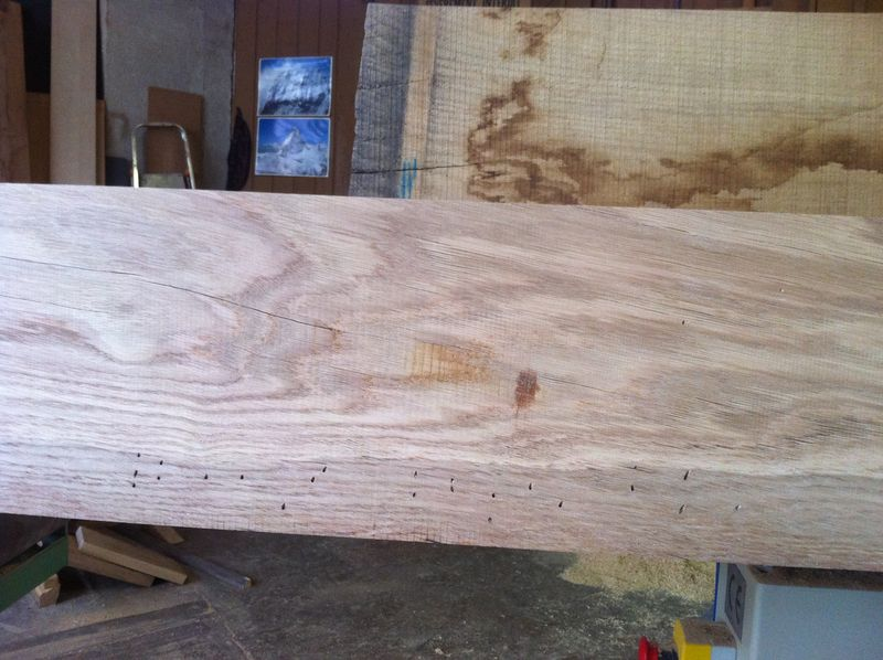 Woodworm in oak heartwood